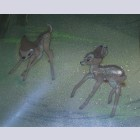 Disney Animation Production Cel Featuring Bambi on Courvoisier Background